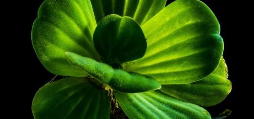 leuchtende Pflanze