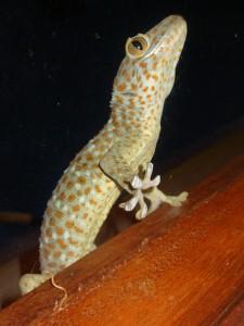 Gecko beim Klettern
