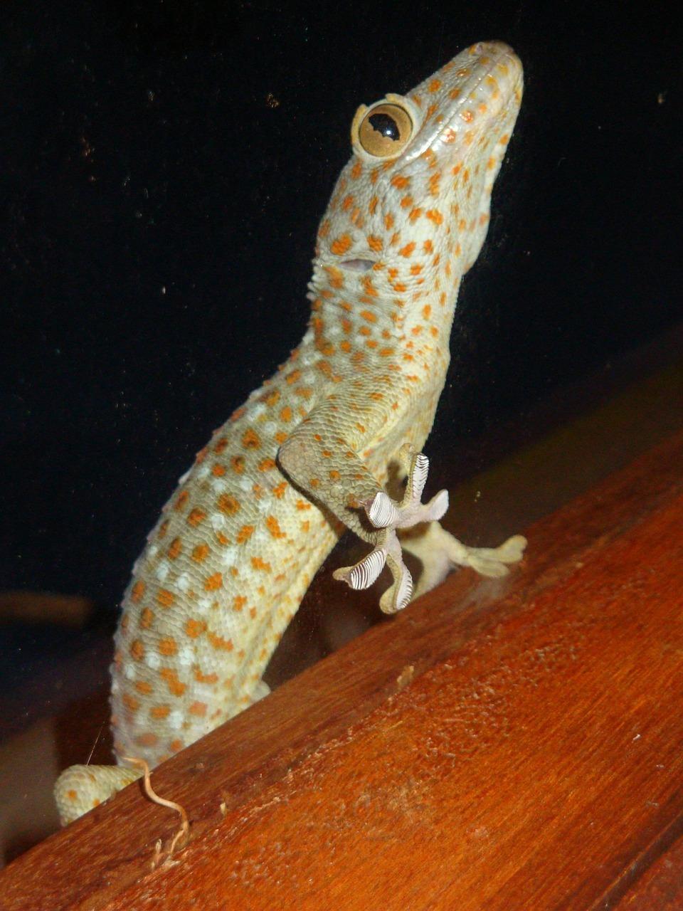 Gecko-Gloves