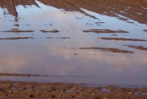 überflutetes Feld
