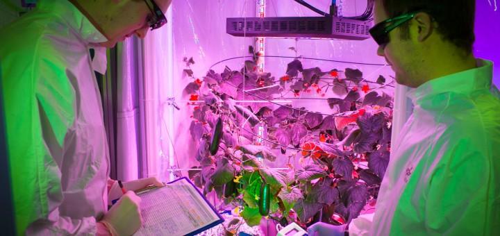 Wachstum unter kontrollierten Bedingungen (Foto: Deutschen Zentrums für Luft- und Raumfahrt (DLR) )