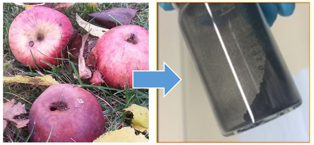 Das neue kohlenstoffbasierte Material für Natrium-Ionen-Batterien kann aus Äpfeln gewonnen werden. (Bild: KIT/HIU)