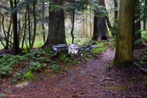 Drohnen suchen selbständig auf Waldwegen nach Vermissten. (Bild: UZH; USI; SUPSI)